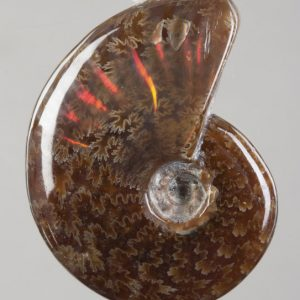 Ammonite Drilled Pendants