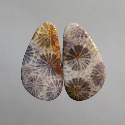 Fossilized Coral Pair