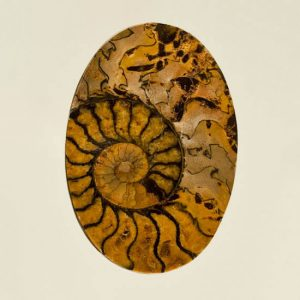 Brown Ammonite in Matrix