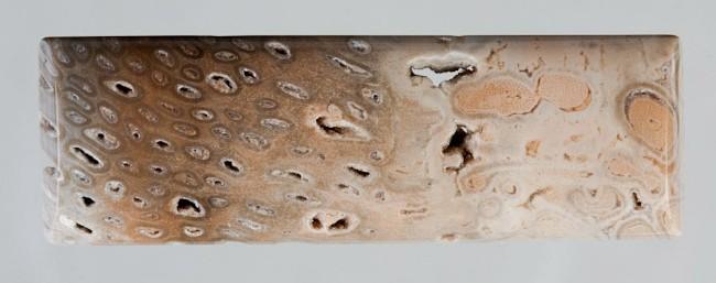Brazilian Fossil Tree Fern