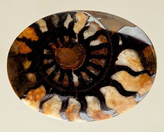 Brown Ammonite in Matrix