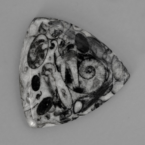 Picasso Ammonite