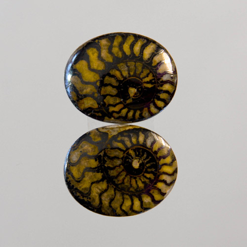 Brown Ammonite in Matrix Pair