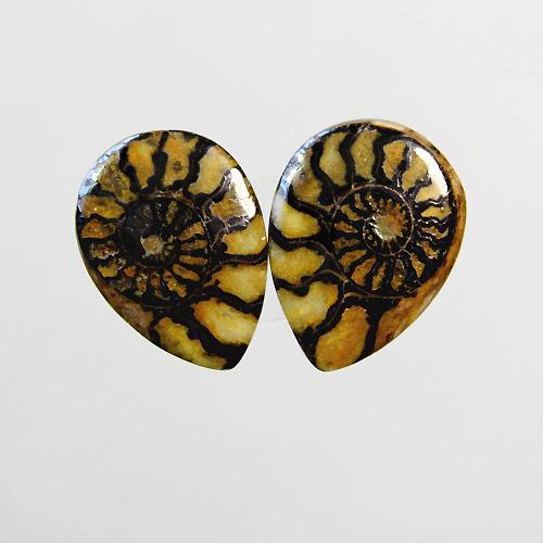 Brown Ammonite in Matrix Pair