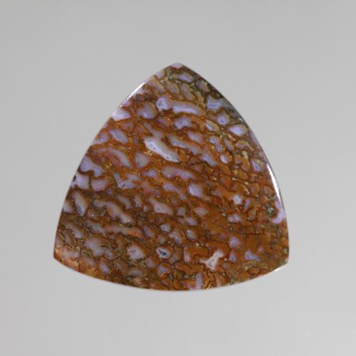 Fossilized Dinosaur Bone