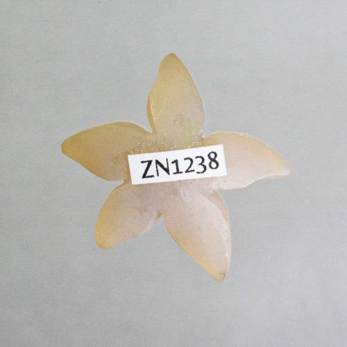 Genovese Champagne Druzy Starfish